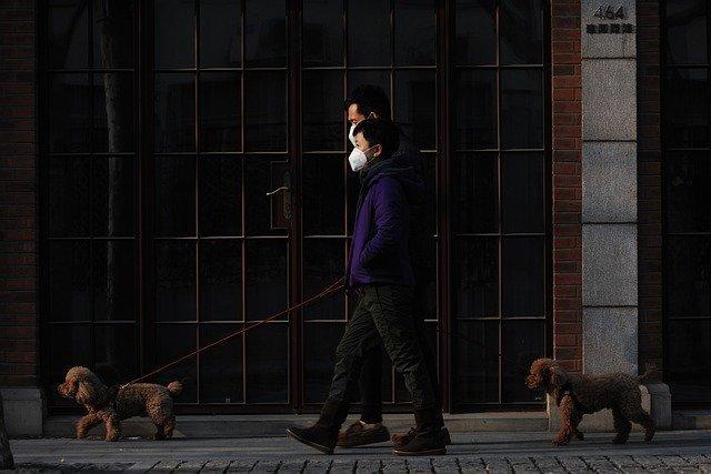Trebaju Li Psi Tijekom Šetnje Imati Masku