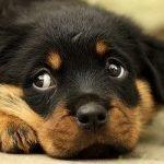 Top 10 najnesretnijih imena za muške i ženske pse - Kucni Ljubimci TV