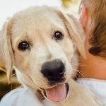 Top 10 najumiljatijih pasmina pasa na svijetu - Kucni Ljubimci TV