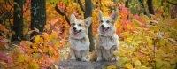 Top 10 sretnih imena za muške i ženske pse - Kucni Ljubimci TV