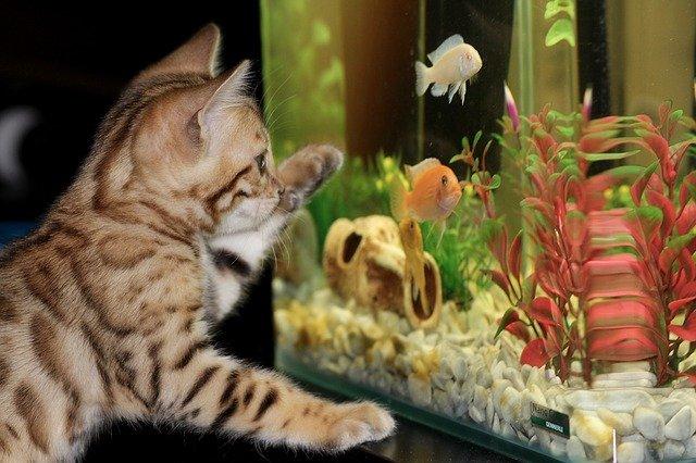 Ribe U Akvarijima