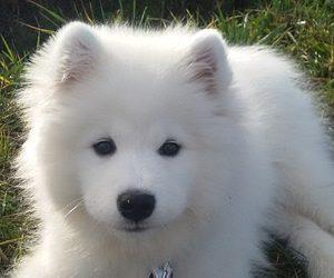 Slatka imena za pse - Kucni Ljubimci TV