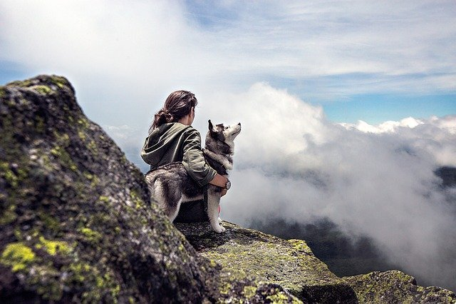 Top 10 pasmina pasa koje najčešće bježe od kuće