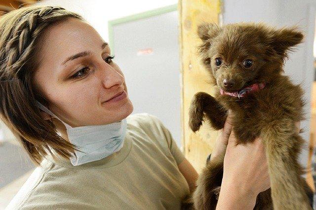 Preventivni pregledi pasa
