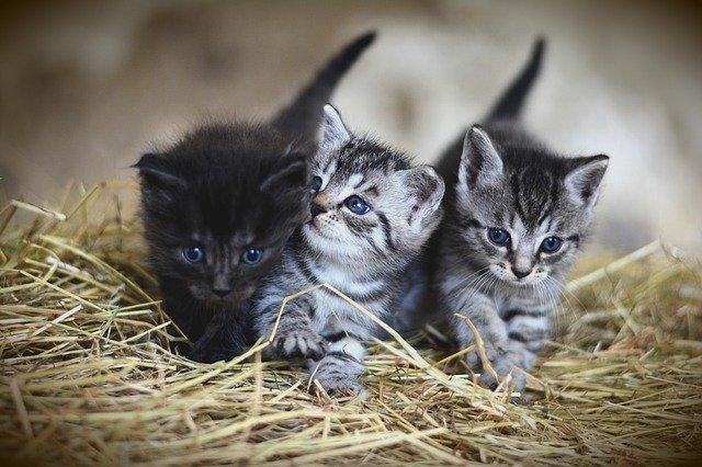 Sve pasmine mačaka na svijetu