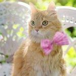 Sve vrste mačaka sa slikama - Kućni Ljubimci TV