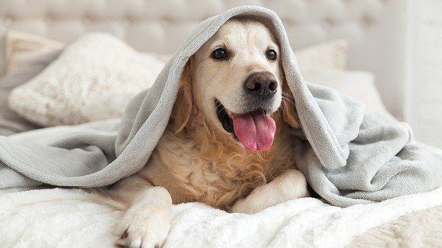 TOP 10 stvari koje povećavaju životni vijek pasa