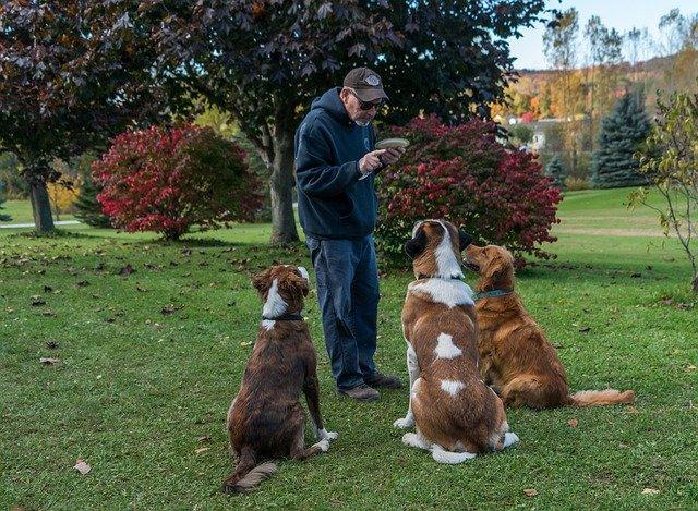 Top 10 najposlušnijih pasmina pasa na svijetu