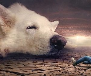 Top 10 spiritualnih imena za pse - Kucni Ljubimci TV
