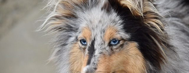 Top 10 vampirskih imena za muške i ženske pse