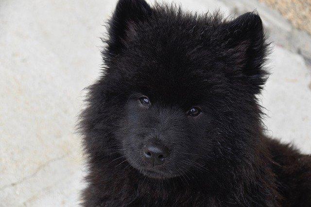 Top 10 vampirskih imena za pse