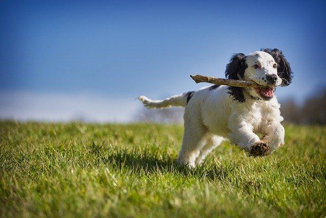 Svjetski dan štenaca