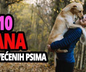 TOP 10 Međnarodnih Dana Posvećenih Psima