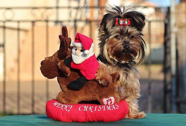 Božićno ime za psa