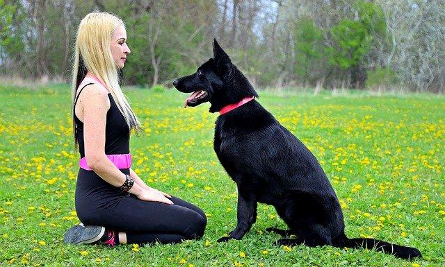 Crni psi