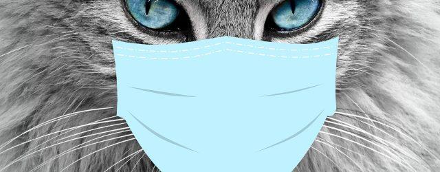 Mogu li životinje smrtno stradati od koronavirusa