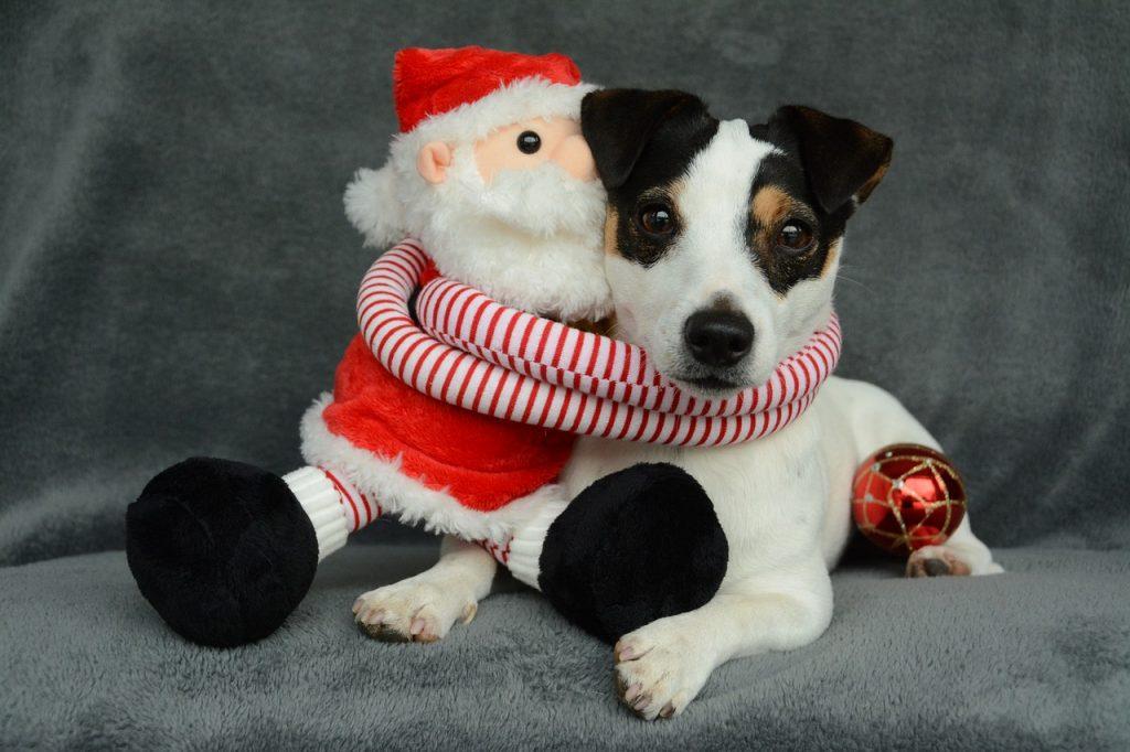 TOP 10 božićnih imena za muške i ženske pse
