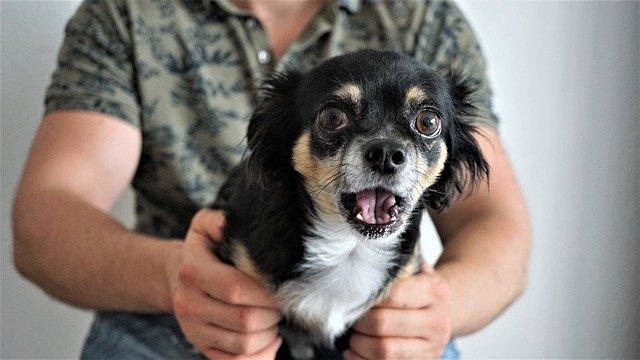 Top 6 razloga zašto se psi, mačke i druge životinje boje vatrometa i petardi
