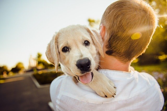 Psi Najbolji Kućni Ljubimci