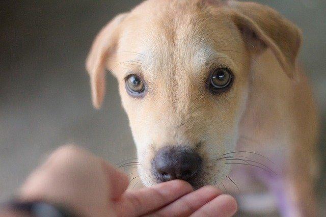 Kako Brinuti O Psima Za Izložbe Pasa