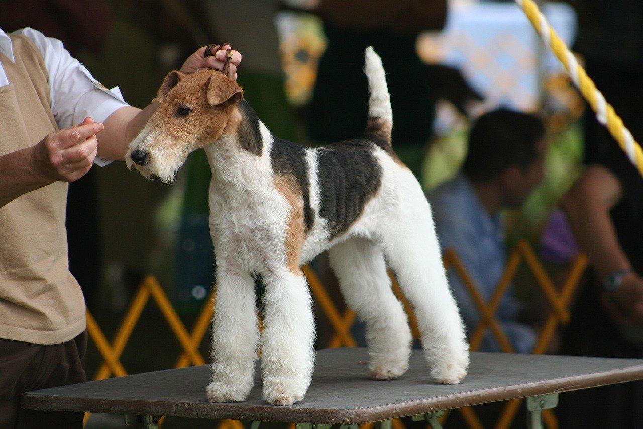 Najljepši psi za izložbe
